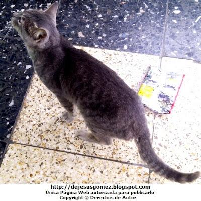 Foto de un gato de perfil por Jesus Gómez