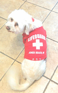 I took Phoebe on a dog friendly boat cruise.  She had to look the part so I got her this adorable Jones Beach Lifeguard shirt!  #dogfriendly