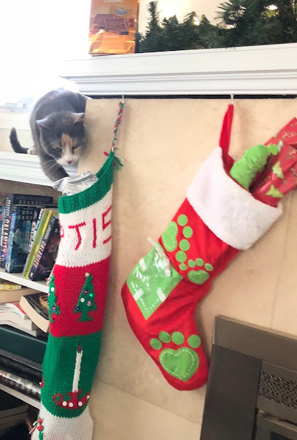 cat getting christmas stocking