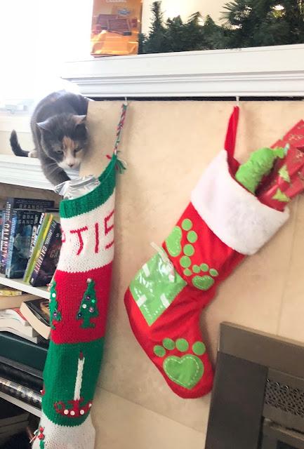 cat getting christmas stocking