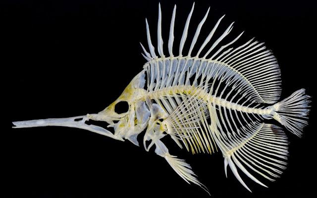 Tejido oseo y peces
