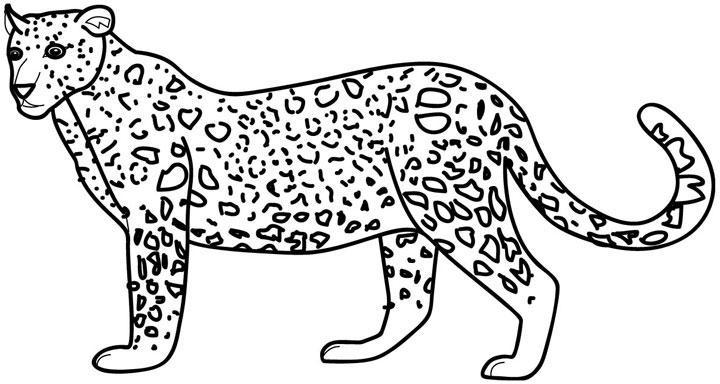 Dibujo Leopardo Para Colorear E Imprimir: Blog MegaDiverso: Leopardo Para Pintar E Imprimir