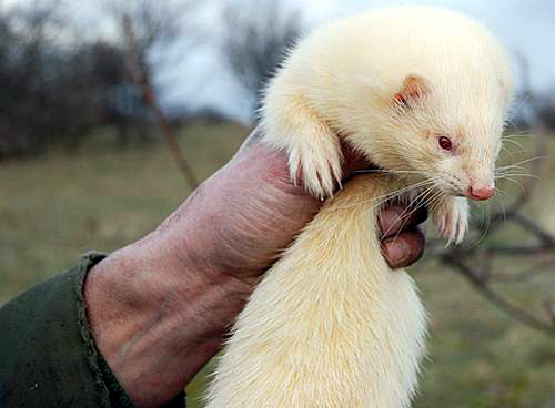 animales albinos - photo #9