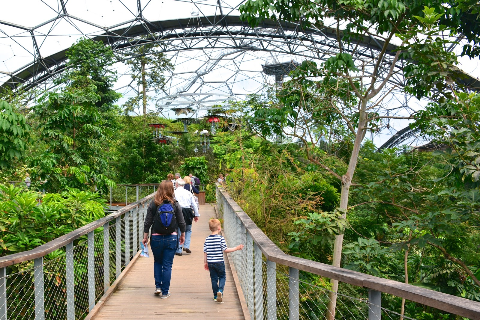 Rainforest biome in the Eden Project, Cornwall
