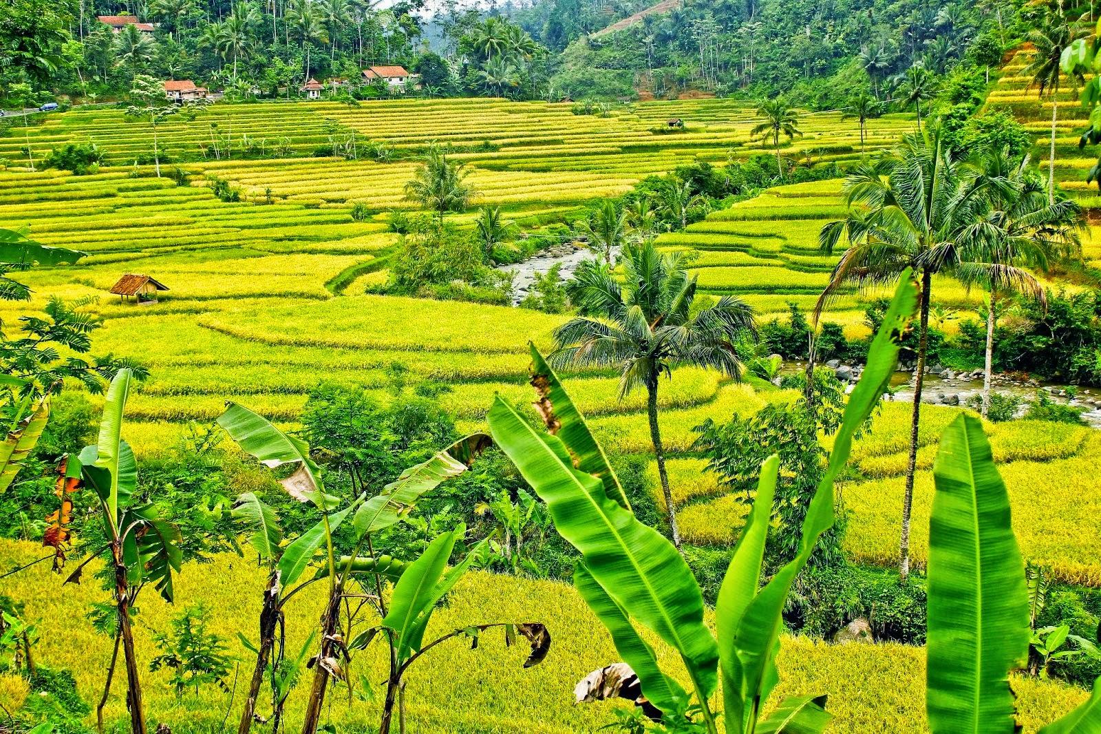 Gambar Pemandangan  Terindah di Indonesia  Foto Gambar Terbaru