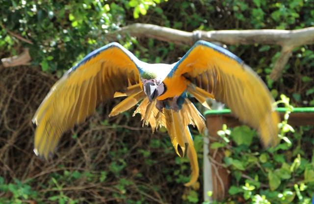 Exhibición de aves exóticas en Selwo Marina