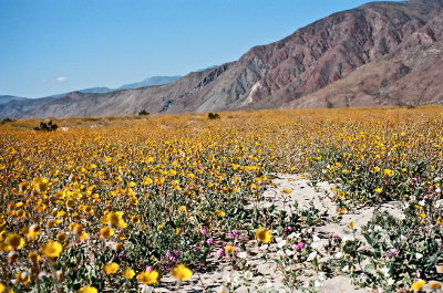 https://kvetchlandia.tumblr.com/post/162718656588/jeff-pott-the-desert-in-bloom-anza-borrego