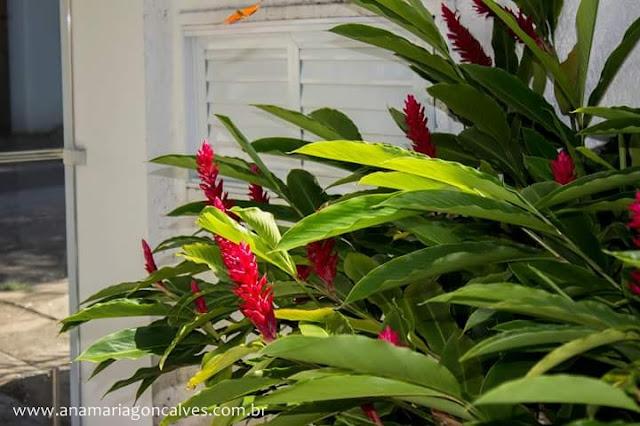 flor-vermelha-jardim