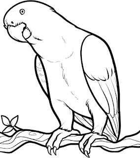 Parrot Animals Coloring Pages