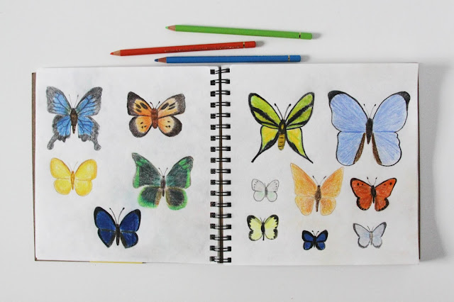 sketchbook, colored pencils, butterflies, sketches, drawing, Anne Butera, My Giant Strawberry