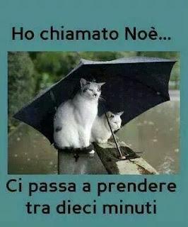 oggi piove