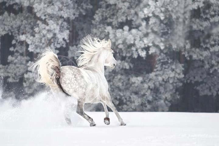 kış resimleri hayvanlarla çekilen
