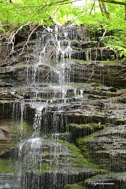 Fall Hollow Waterfall on the Natchez Trace Parkway Photos & Review