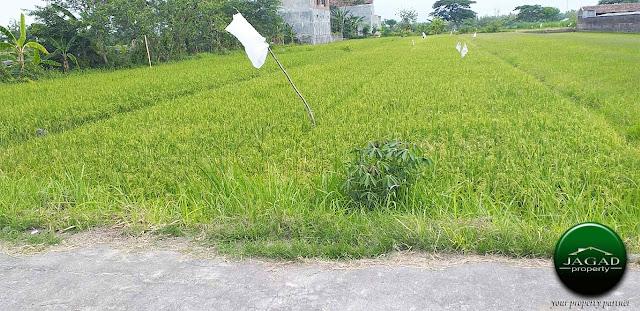 Tanah Produktif dekat Stasiun Srowot Klaten
