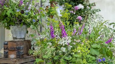 'Plot 2': La belleza y el caos de cultivar flores