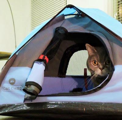 Cat Camp Tent