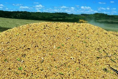 Paraná poderá colher 19 milhões de toneladas de soja, maior safra da história