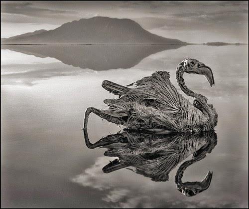 Lago Natron, Tanzânia, Transforma Animais em Estátua