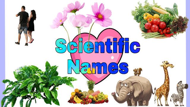 All Scientific Names In Hindi