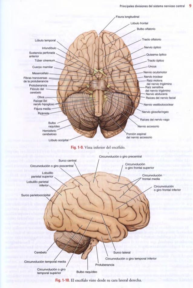 LIBROS DE MEDICINA : NEUROANATOMÍA CLÍNICA DE SNELL TRUE PDF