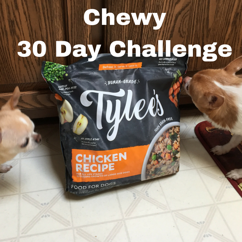Ask Away Blog Chewy 30 Day Challenge Final Thoughts On Tylees
