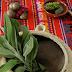 Operativos gratuitos de medicina mapuche se realizan en Osorno