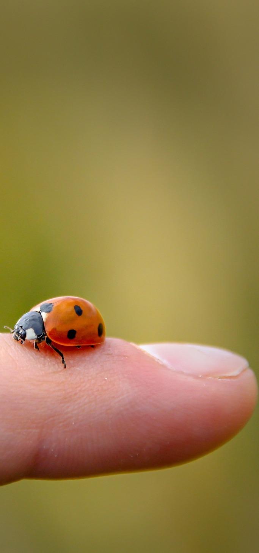 Ladybug beauty in miniature.