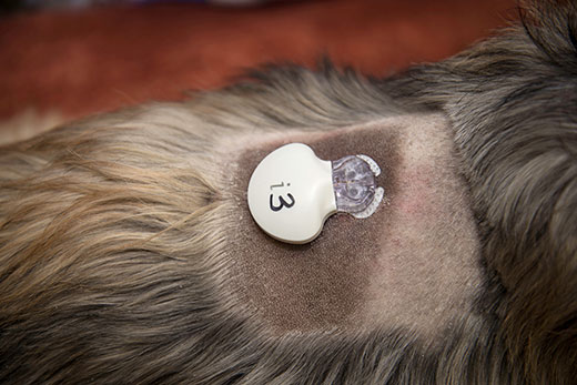 Veterinary Highlights Ipro Continuous Glucose Monitoring