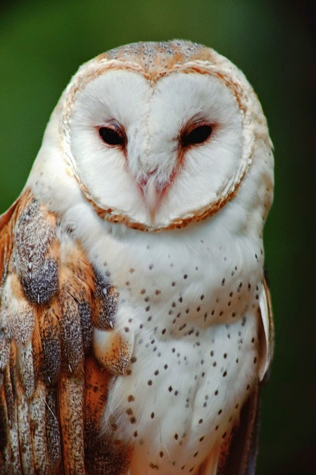 Breathtaking Beauty of Owls Ever Caught 5