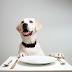 Τι δεν πρέπει να φάει ο σκύλος σας το Πάσχα;
