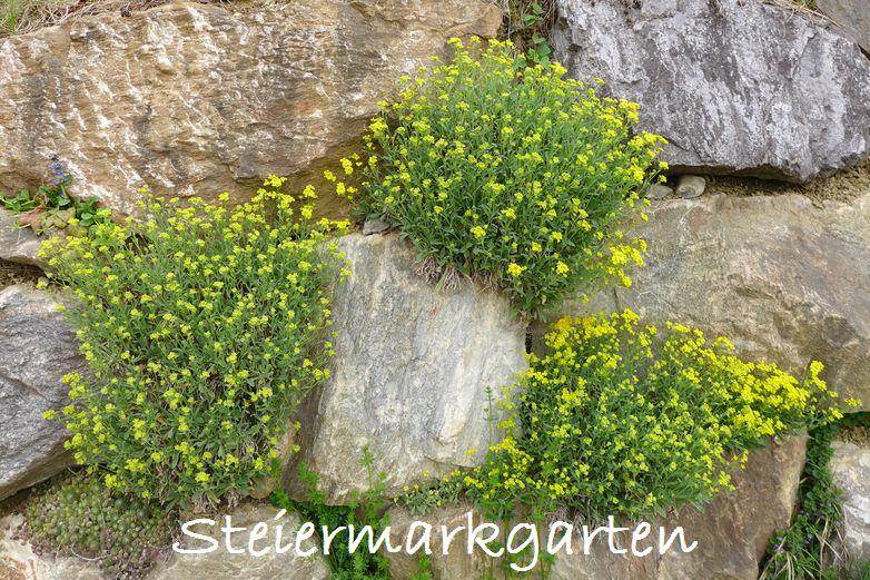 Steinmauer-Steiermarkgarten