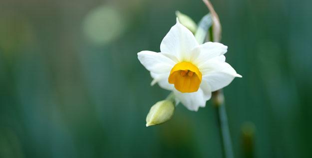 hoa thuy tien 2