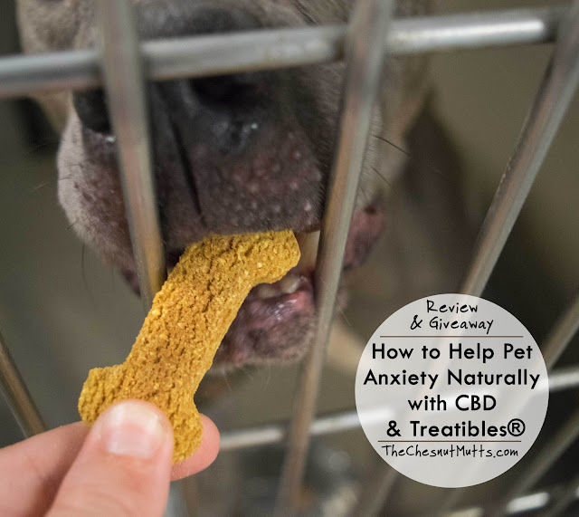 Review & Giveaway: How to Help Pet Anxiety Naturally with CBD & Treatibles®