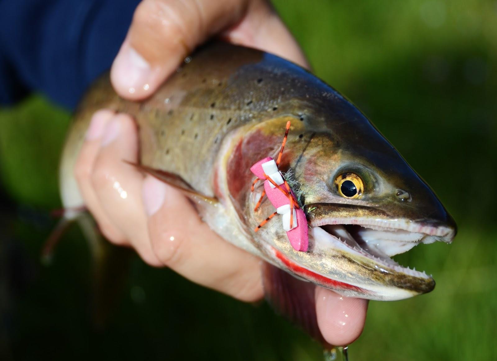 Двухголовые рыбы в москве реке фото