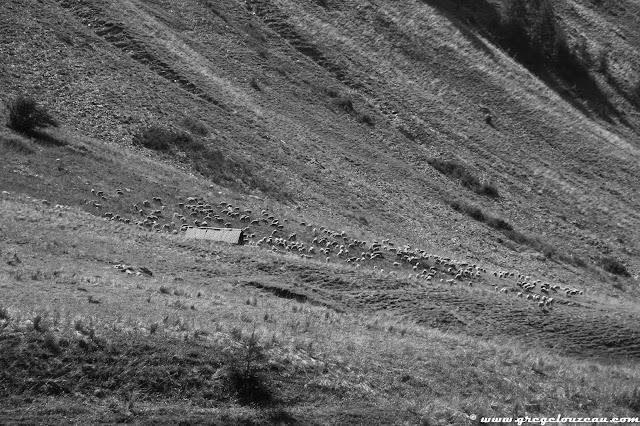 A l'alpage, PN du Mercantour