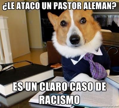 perro-abogado