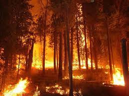Αποτέλεσμα εικόνας για Όταν καίγονται τα δάση…