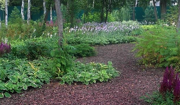 Хосты в тени сада