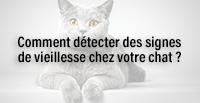 Comment détecter des signes de vieillesse chez votre chat ?