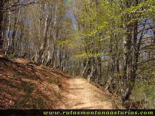 Bosque en la ruta del Tabayón del Mongallu