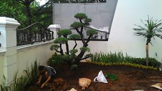 Jual pohon bonsai beringin korea murah