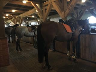 Galiny, Puola, Horsexplore, ratsastusmatka