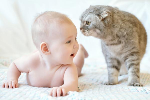 Are Your Cats Safe for Your Baby? Find the Answer Here!