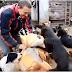 Σώζοντας 450 σκύλους...