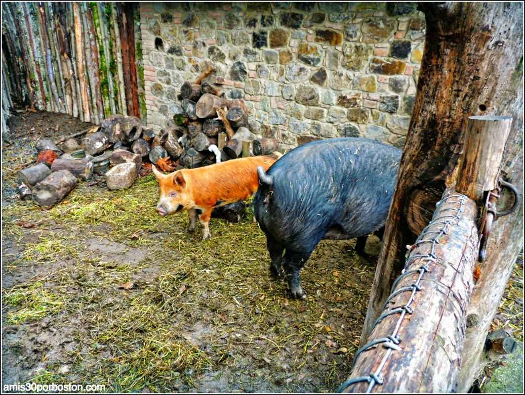 Ruta por las Bodegas del Valle de Napa: Animales en el Castello di Amorosa
