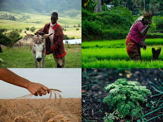 African agriculture is divided into two different types, including industrialized agriculture and subsistence agriculture.