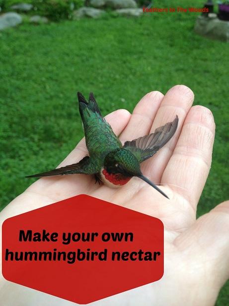 MYO hummingbird food