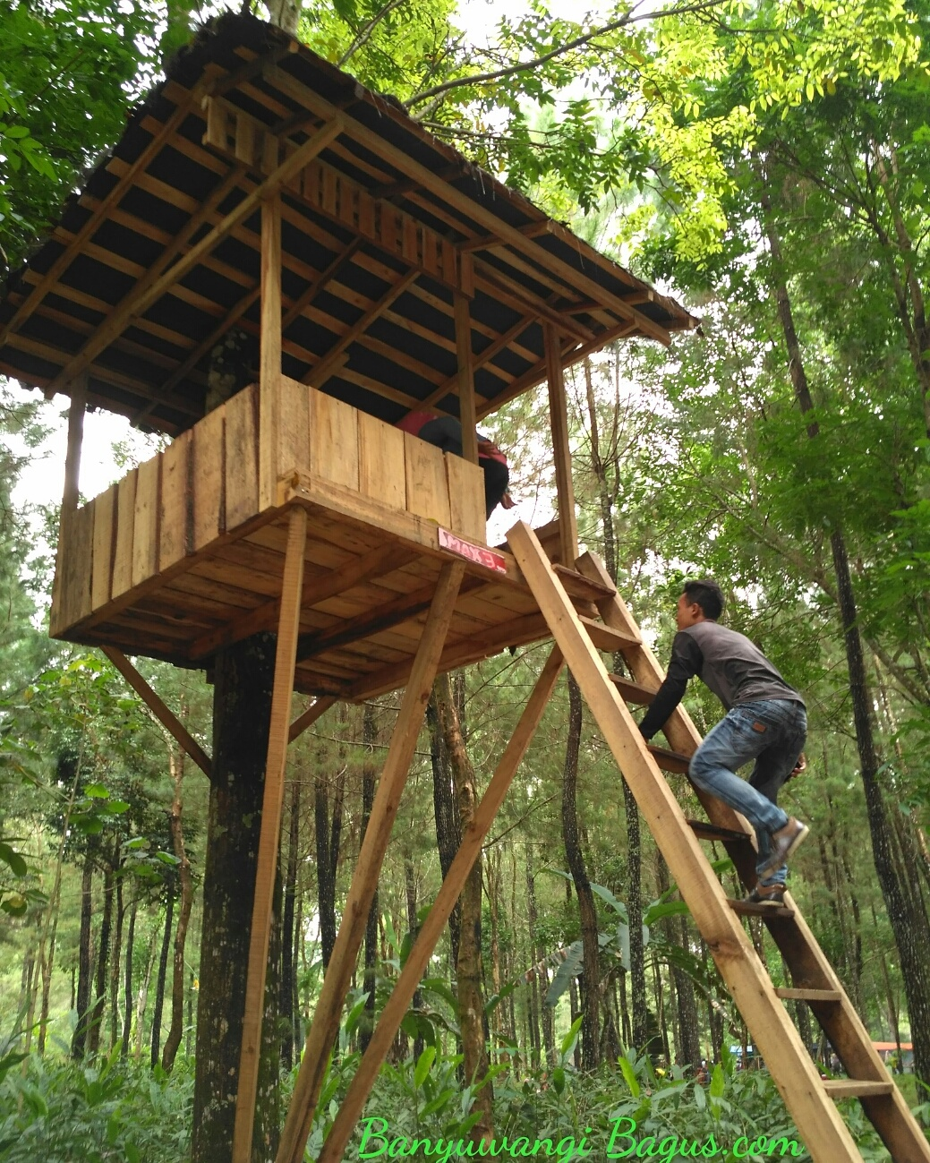 55 Desain Rumah Pohon Modern Terkeren Parkiran Desain