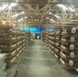 Harga Telur Jawa Barat Hari Ini