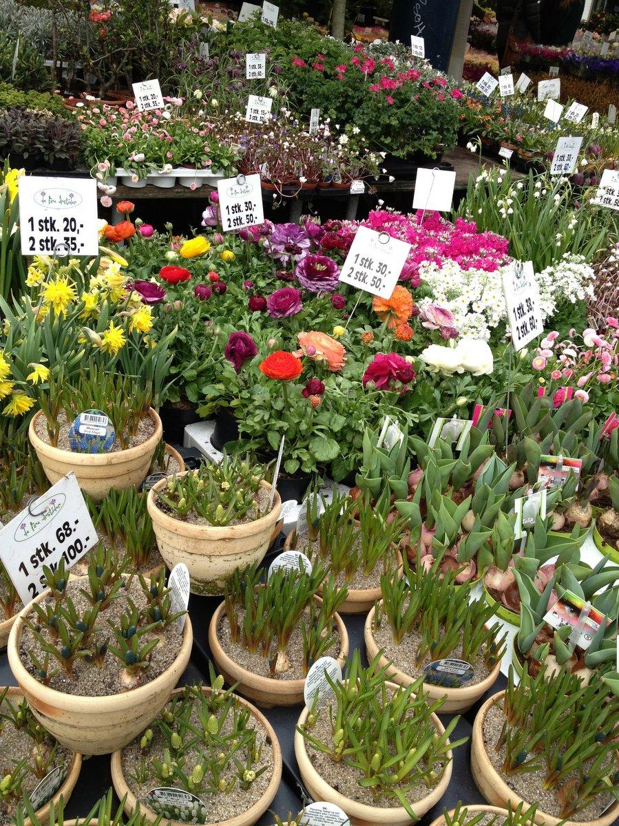 blomsterhandler lyngby hovedgade